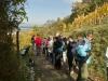 Bergstraße - 28.10.2012 - Aufstieg auf den Melibokus bei Zwingenberg
