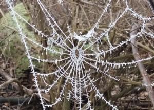 Winterimpressionen im Auwald