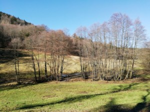 Naturschutzgebiet Eiterbachtal