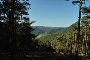 In den Weiten des Pfälzerwaldes